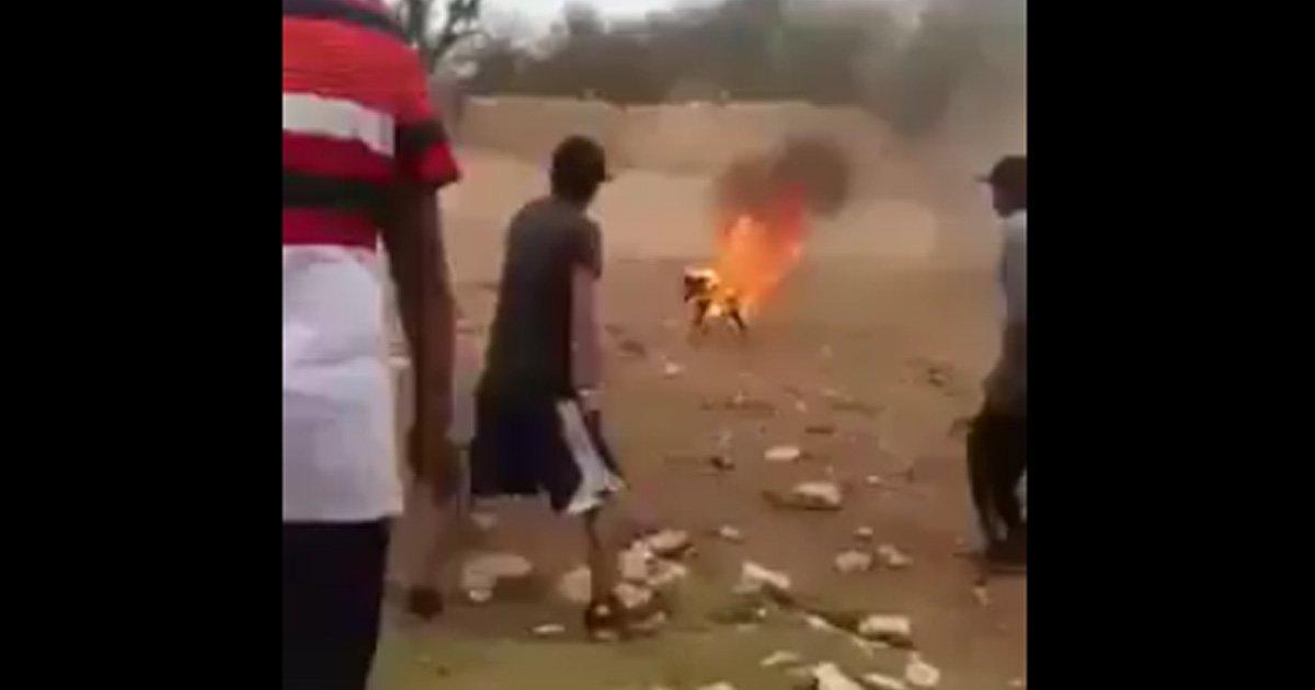 Eles atearam fogo e explodiram foguetes contra um cão. Cadeia por essa monstruosidade!