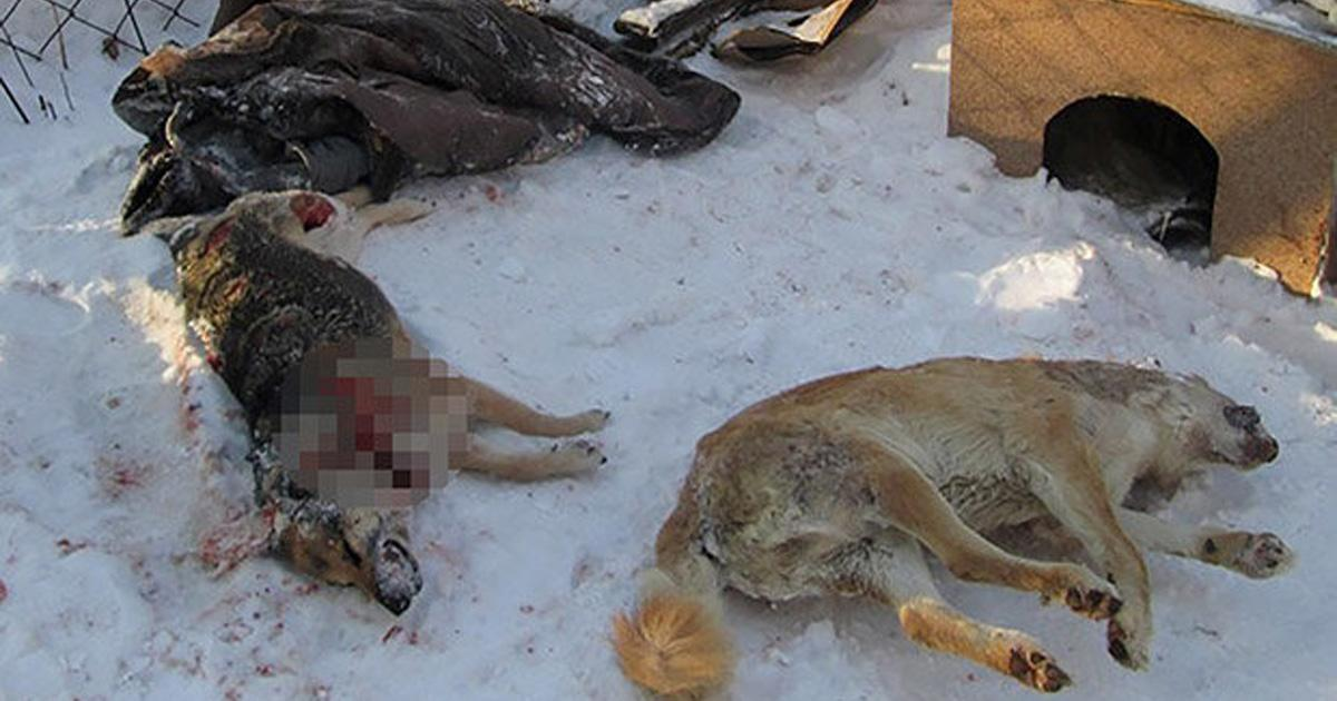Open a petition against the killing of stray dogs in Russia!