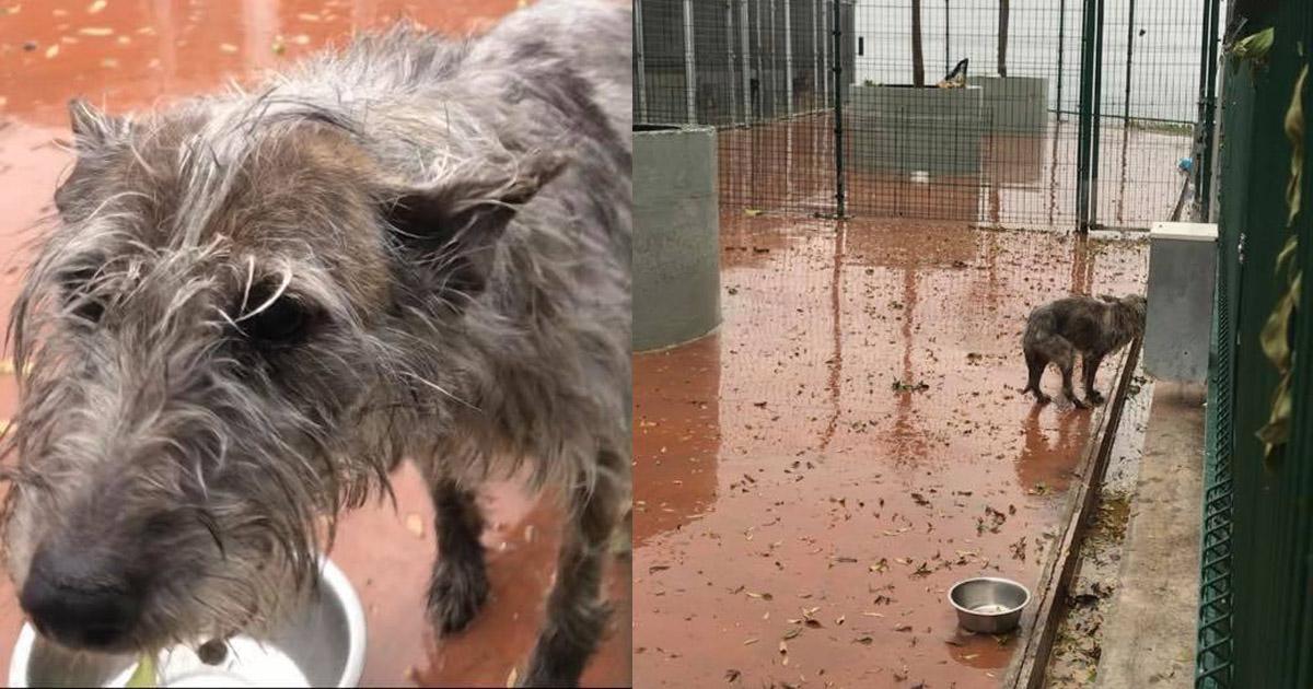 Rescaten a los perros de la perrera de Badalona!