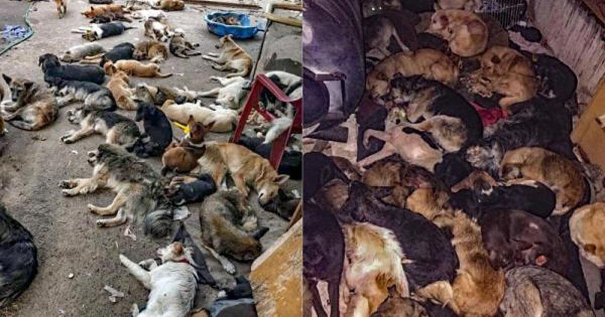 Stop killing dogs in Ukraine