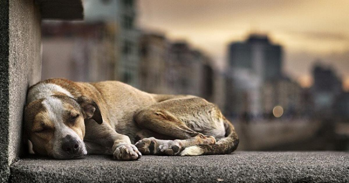 Rescue abandoned animals from the streets!
