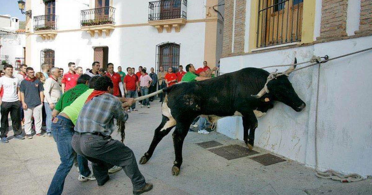 "Stop this ""fiesta"" in Ohanes, Almeria"