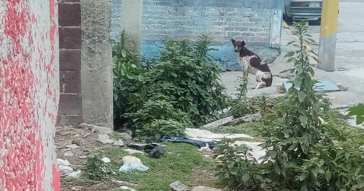 Put feeders for abandoned dogs