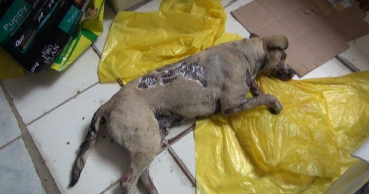Justicia para perrita que murió quemada en baños termales