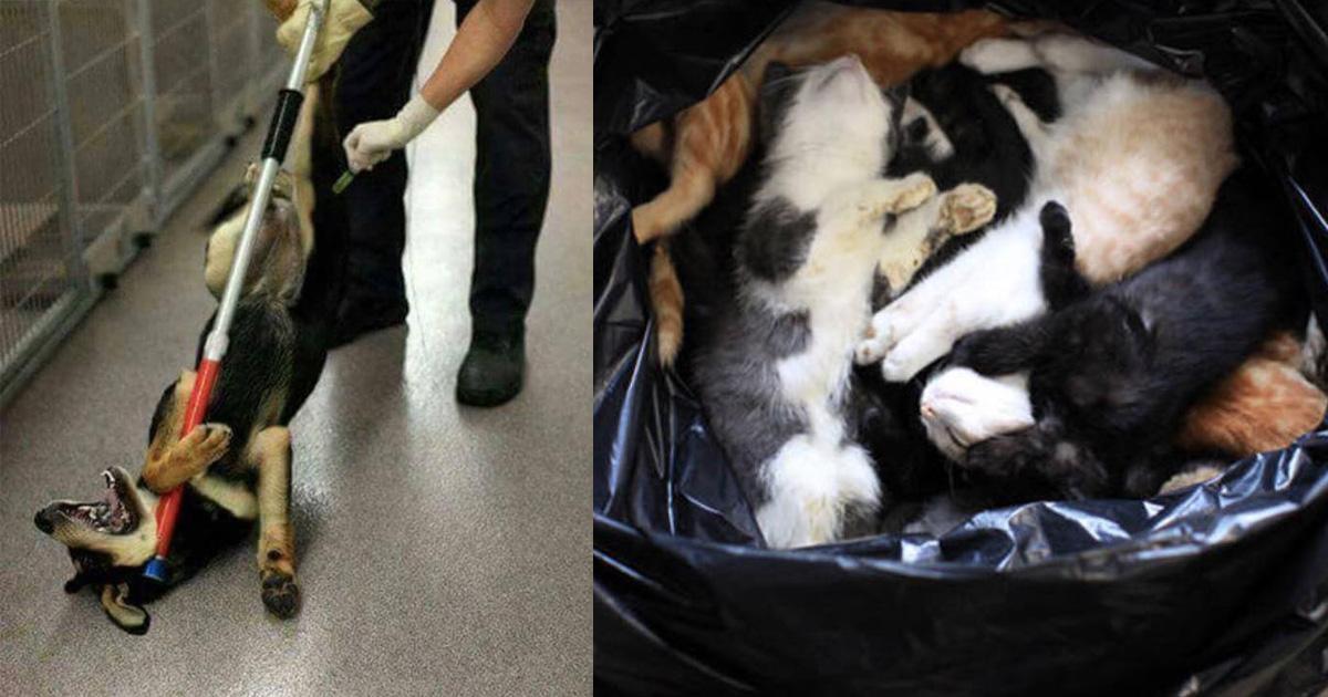NO al exterminio de animales en las perreras municipales!