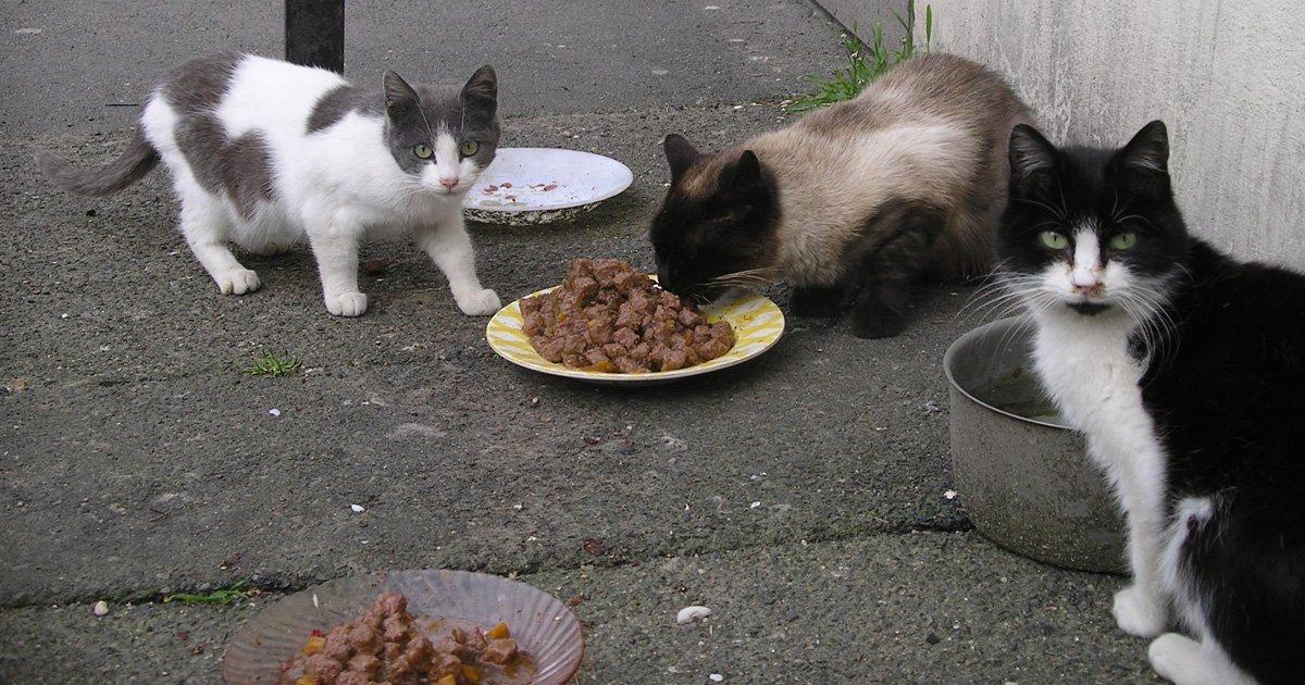 Fined for feeding stray cats. Continue feeding stray animals, maintain sterilization