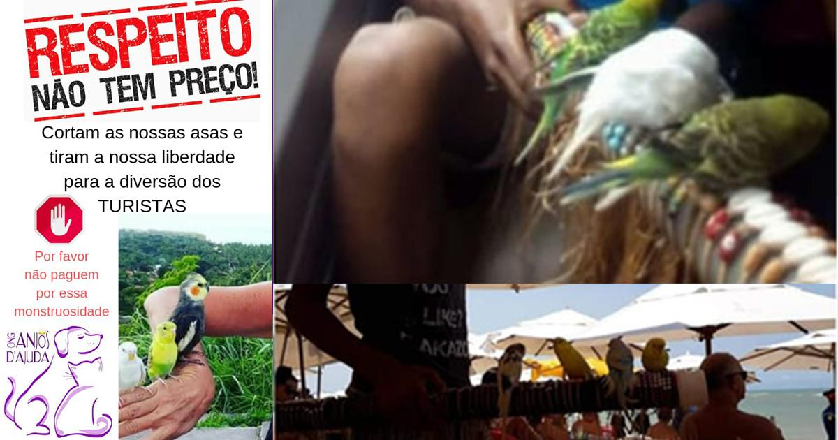 Investigar a venda dos pássaros nas praias em Porto Seguro e ao redor, Bahia, Brasil