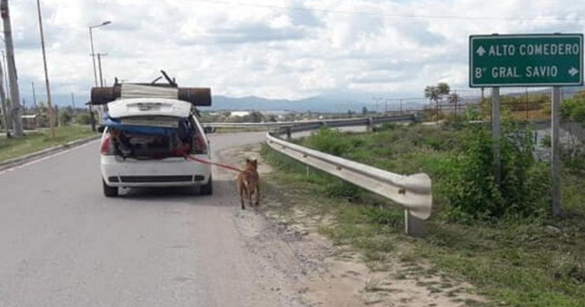 Rimuovi il cane da lui per abuso di animali