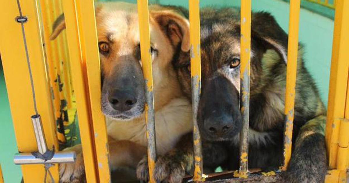 Por favor, que se controlen las perreras, es terrible