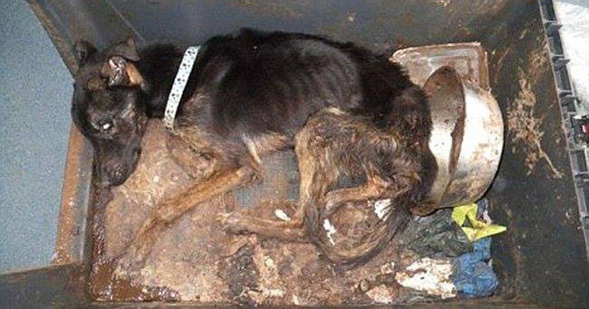 Prisión para un hombre que mato de hambre a su perro, que sea la norma!