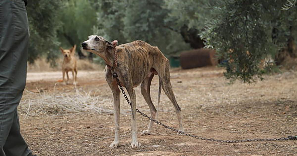 Do not use dogs for hunting in Spain!