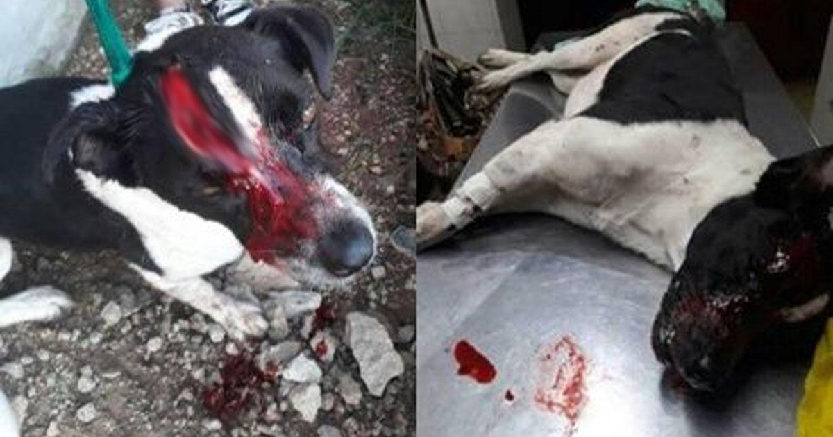 They rape, cut and burn dogs alive in Parana and Santa Fe, we want them to send investigators!