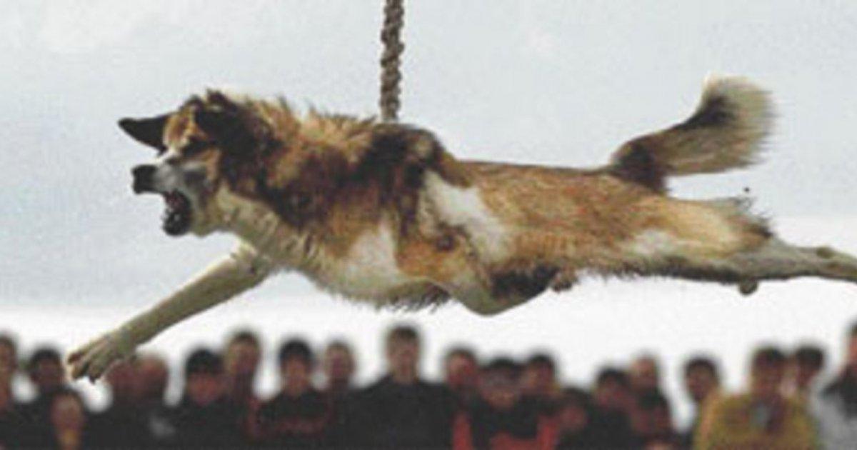Detengan el Giro del Perro de Bulgaria!
