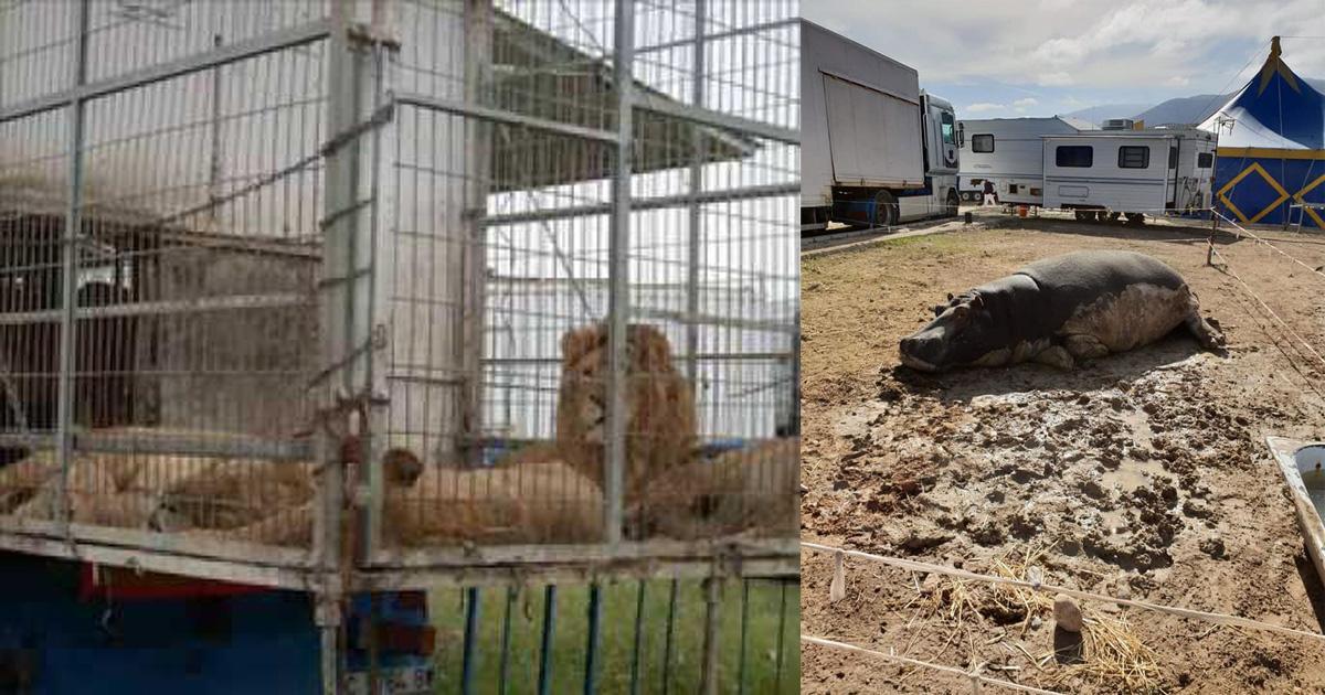Rescaten a los animales del Circo Roma Dola y pongan fin a circos con animales!