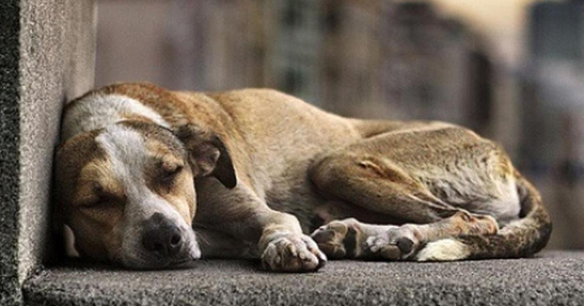 Do you think the punishment against animal abuse should be toughened? If your answer is YES, sign the petition!